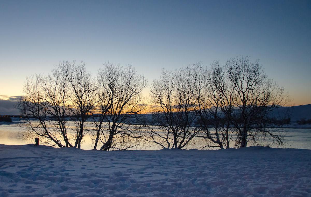alberi islandesi