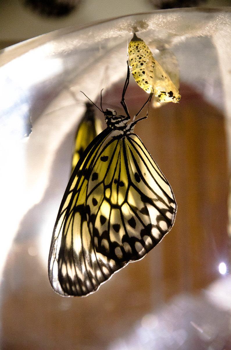farfalla-1-1-1